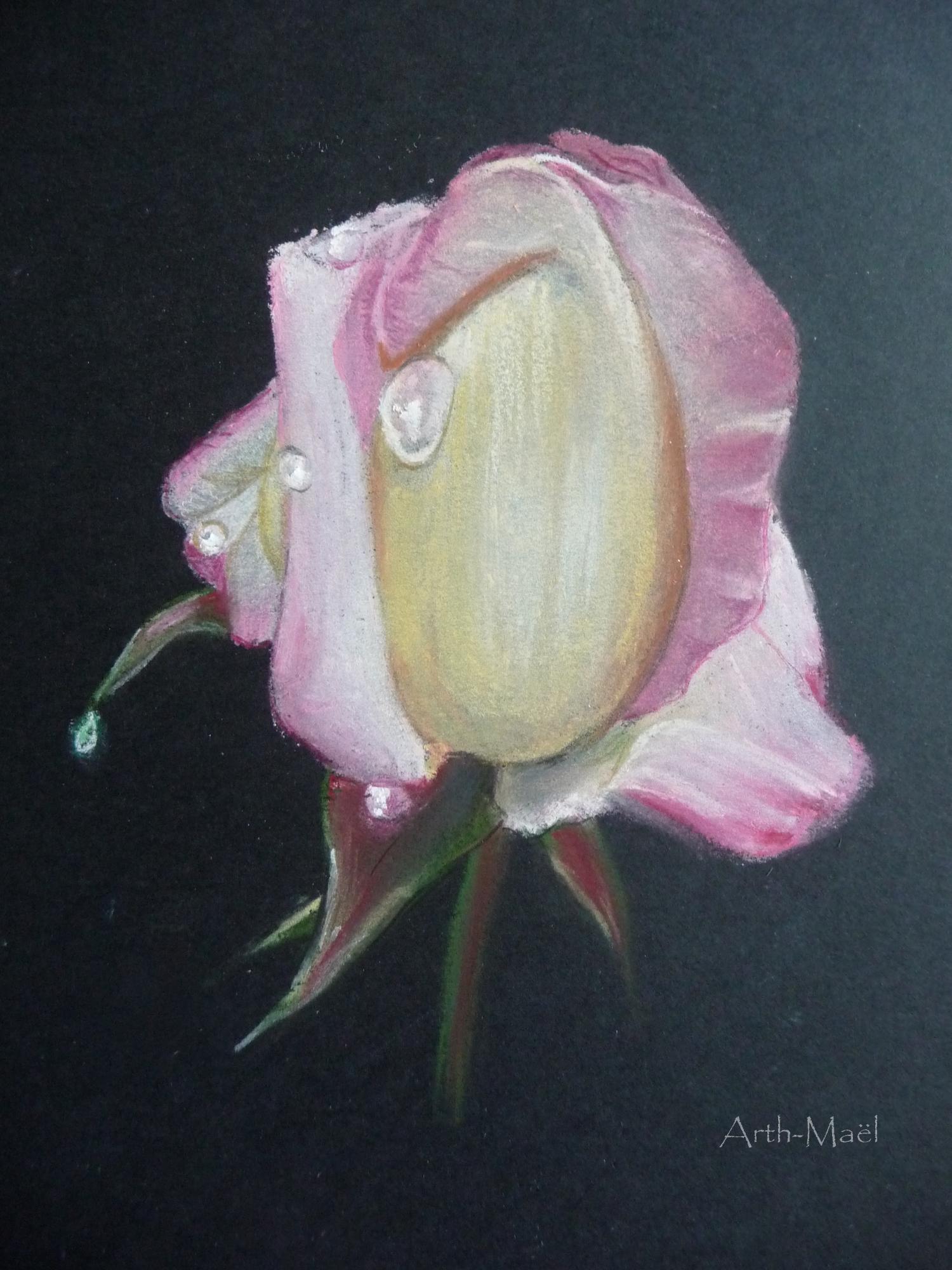rose...rosée 2